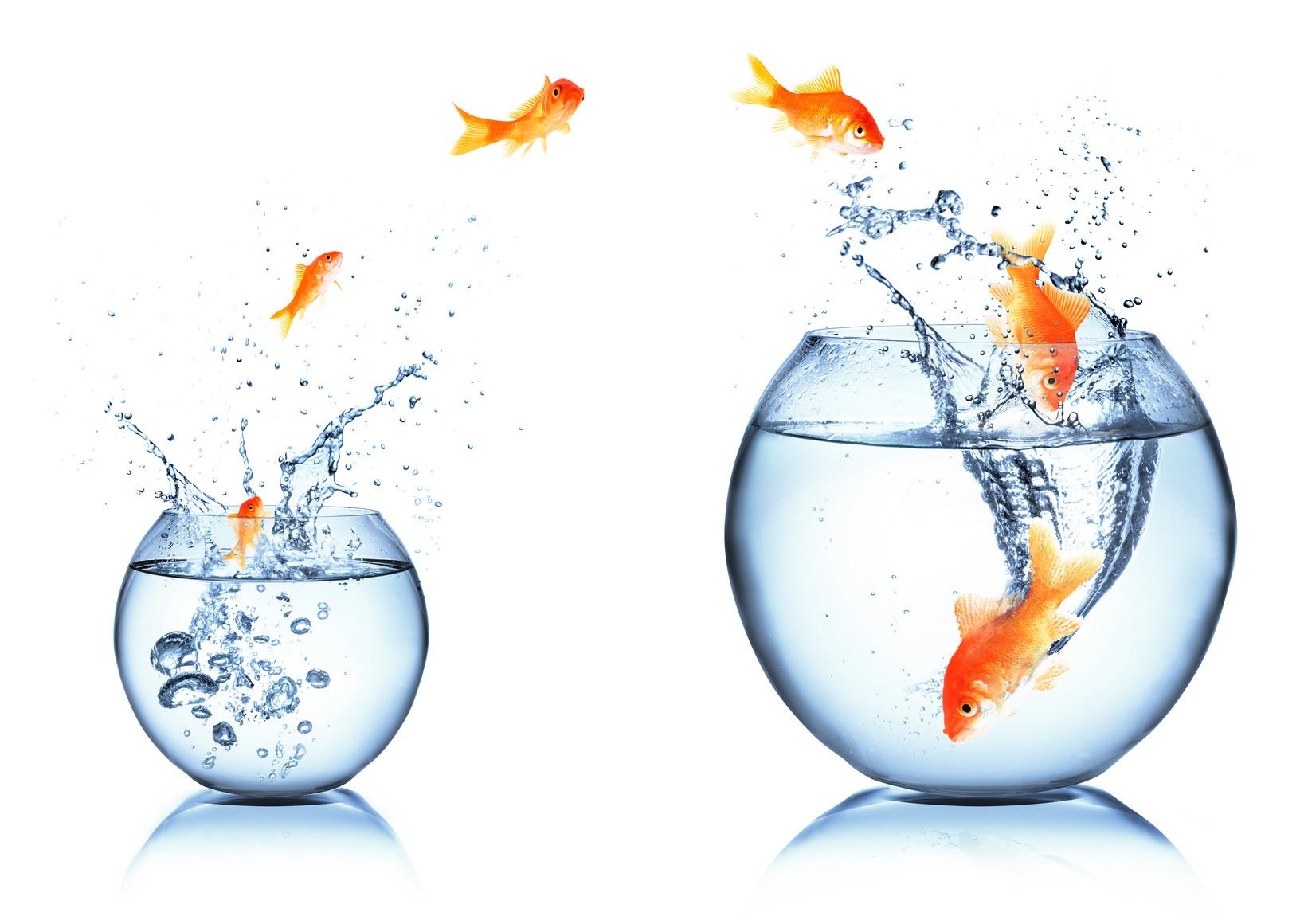 Changement d'aquarium